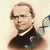 Bioquiz Mendel Genetics Online Miscellaneous game