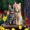 Cats 1 Puzzle Online Miscellaneous game