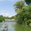 Central Park jigsaw Online Puzzle game
