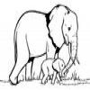Coloring Elephants 2 Online Miscellaneous game