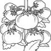 Coloring Vegetables 1 Online Miscellaneous game