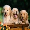 Dogs 2 puzzle Online Miscellaneous game