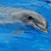 Dolphins And Other Marine Mammals Puzzle 1 Online Miscellaneous game