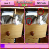 Find the Differences Cutest Cats Online Puzzle game