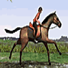 Horse Jumping Online Action game