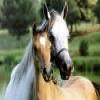 Horses Puzzle Online Puzzle game