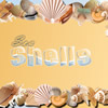 Sea Shells Online Puzzle game