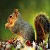 Squirrel Puzzle Online Puzzle game